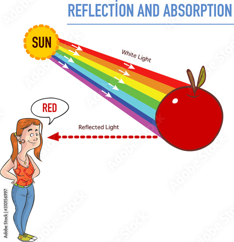Photo Reflection and absorption vector illustration