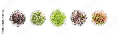 Fototapeta Set of colored micro greens isolated on white obraz