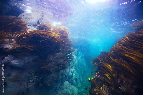 diving-background-bubbles-underwater