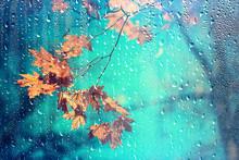 Rain Window Autumn Park Branch...
