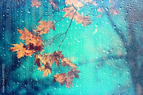 Fototapeta rain window autumn park branches leaves yellow / abstract autumn background, landscape in a rainy window, weather October rain obraz