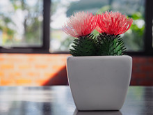 3 Cactus Plants Constructed Fr...