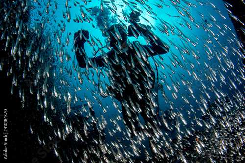 Photo Scuba diver inside Glass fishes giant bait ball