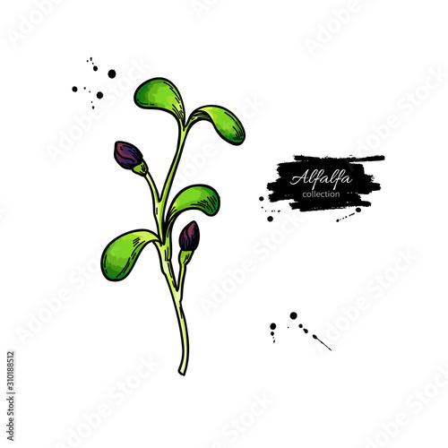 Alfalfa sprout vector drawing Wallpaper Mural