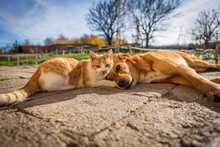 Dog And Cat Play Together. Cat...