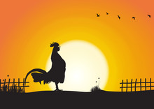 Silhouette Of Chicken Crowing ...