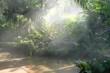 canvas print picture - sunlight mist fog in park. foggy misty garden. water spraying from sprinkler