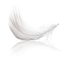 Grey Striped Feather Curl With...