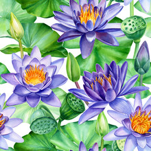 Seamless Pattern, Water Lily, Purple  Lotus Flowers, Buds, Leaves, Seeds On An Isolated White Background, Watercolor Painting, Illustration