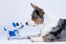 Two Dogs, Real Corgi And Elect...