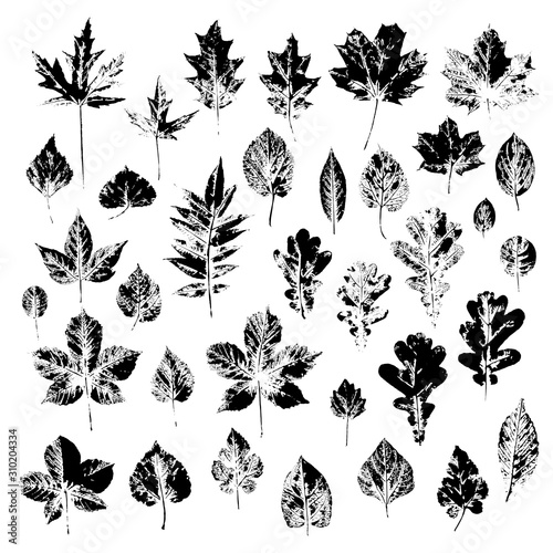Photo Black imprints of tree leaves on a white background