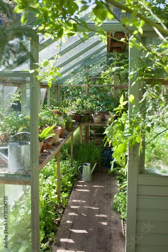 Valokuvatapetti Plants Growing In Greenhouse