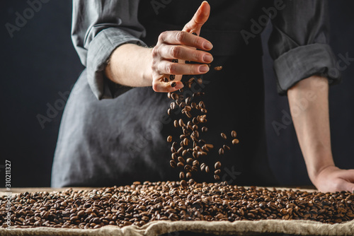Fototapeta Hand pouring fragrant coffee beans on a pile of roasted Arabica grains. Selection of fresh coffee for espresso obraz