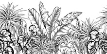 Seamless Border With Different Tropical Plants. Black And White Illustration. Hand Drawn Vector.