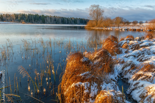 Fotografie, Obraz Swampy lake shore with red grass on the bumps and the first snow.