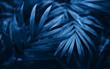 Beautiful blue fern close up.