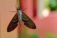 Gray Moth Close-up Through The Window Glass.