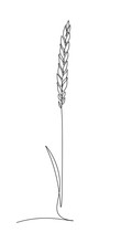 Wheat Ear In Continuous Line A...