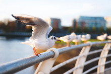 Seagull Ready To Fly