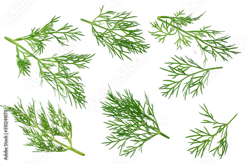 Fototapeta fresh green dill isolated on white background. top view