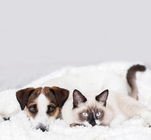Cat And Dog Together On White ...