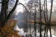 Rzeka Supraśl, Puszcza Knyszyńska, Grudniowy Ciepły Dzień, Ocieplenie Klimatu