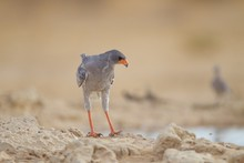 Selective Focus Shot Of An Exotic Bird In The Middle Of The Desert