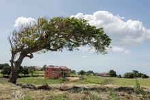 Mango Tree Branch Against Sky ...