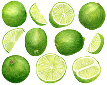 Watercolor Lime Set. Hand Draw...