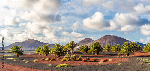 Fotografie, Obraz Landscape with volcanoes mountain in Timanfaya national park, Lanzarote, Spain