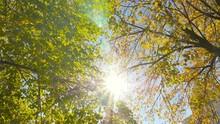 Golden Autumn. The Bright Rays...
