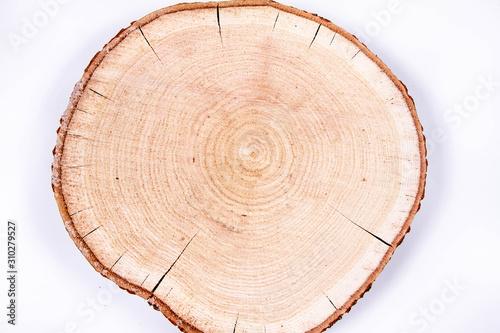 Photographie Slice of fresh oak wood on a white background