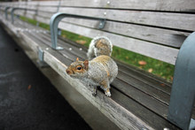Cute Gray Squirrel Looks From ...