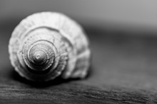 Shell On A Wooden Background