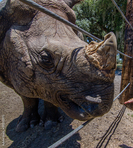 Rhinoceros Nose and mouth