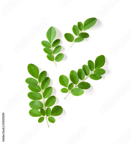 Obraz Moringa leaf isolated on white - fototapety do salonu