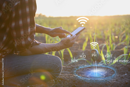 Fototapeta IoT(Internet of Things)smart agriculture industry 4.0,5.0 concept.farmer working in farm To collect data to study and develop his farm to improved productivity in the future. obraz