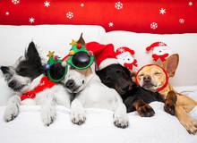 Christmas Santa Claus Dog  Cou...