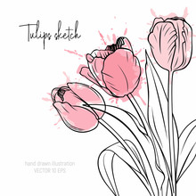 Tulips Sketch With Watercolor Splash. Spring Flowers Vector Illustration. Aquarelle Drawing Bouquet.