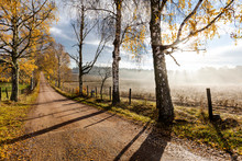 Autumn Trees Along Dirt Road