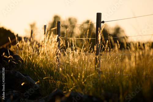 Fence in meadow - 310385700