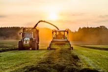 Harvest On Field