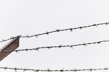 Barbed Wire On The Fence.