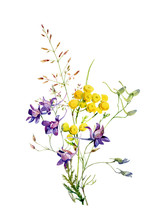 Bouquet Of Watercolor Wild Blue Flowers And Tansy