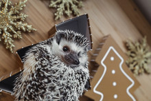 Christmas Time - Cute Hedgehog Picture