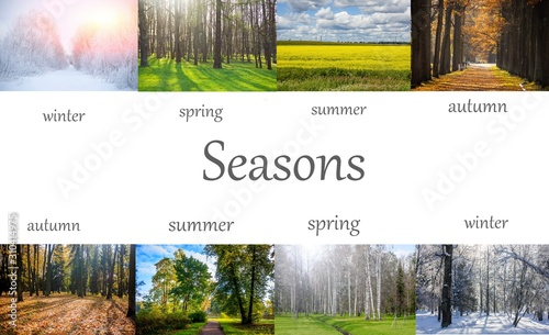 Fototapeta Collage seasons . All season. Seasons in one photo. Winter spring summer autumn. Tree branch. Grass with dew. Nature. obraz