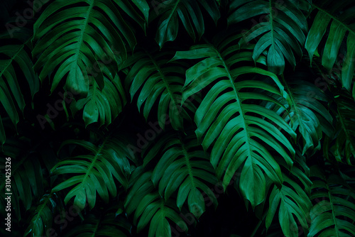 tropical leaves, dark green foliage in jungle, nature background