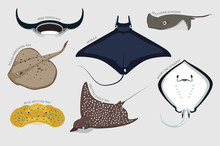 Stingray Set Various Kind Iden...