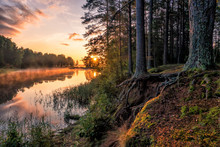 Sunrise Over The Lake. There Is A Pine Forest On The Shore. The Roots Of The Outer Trees Are Bare. Landscape.