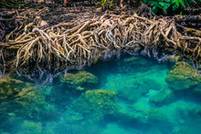Mangrove Forest Ecosystem With...